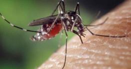 Das beste Mückenspray